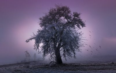 What Are Tree Spirits and How To Connect With Them