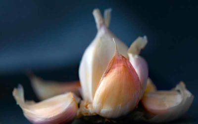 Garlic – My Favorite Healing Herb