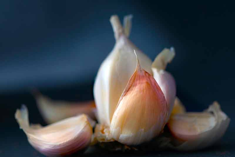 Garlic – My Favorite Healing Herb